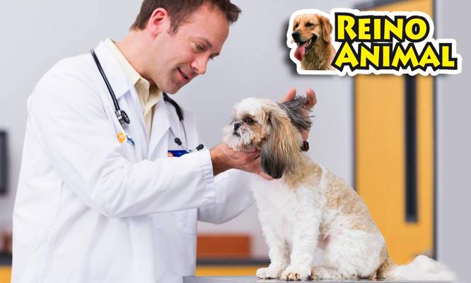 Reino animal Baño premium para perro Consulta medica y desparasitacion