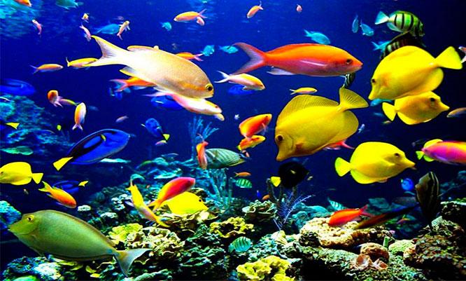 Acuario nautilus entrada para ni o o adulto alimento for Alimentacion para peces de acuario