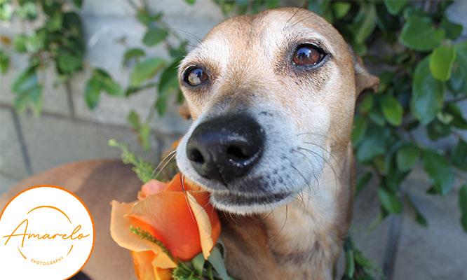 Sesion de fotos para mascotas con Amarelo Fotografia