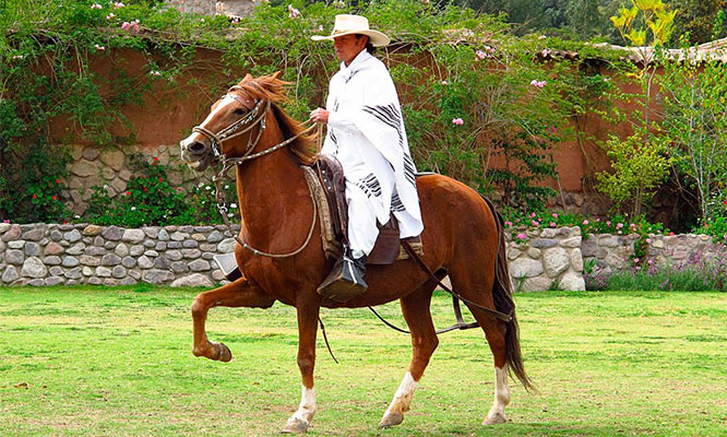 Full Day Turismo Vivencial Show Caballo de Paso Playa Chancay y mas