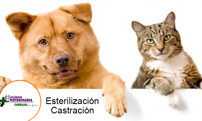 Esterilizacion para perros y gato