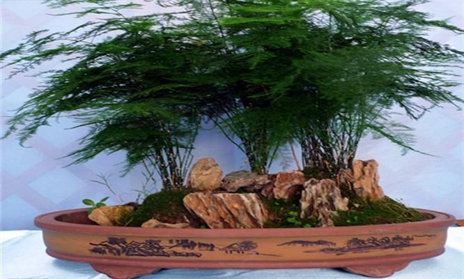 Precioso bonsai 3 modelos a elegir
