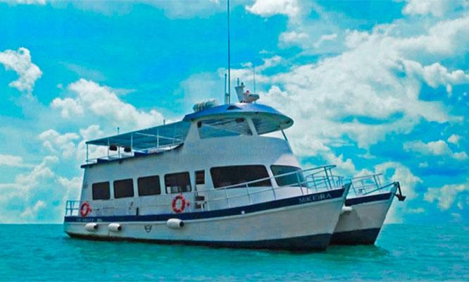 Tour Marino a Isla Palomino nado con lobos marinos buceo profesional