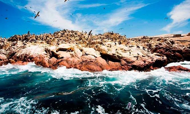 Full Day Paracas- Islas Ballestas- Huacachina con Peru en ruta