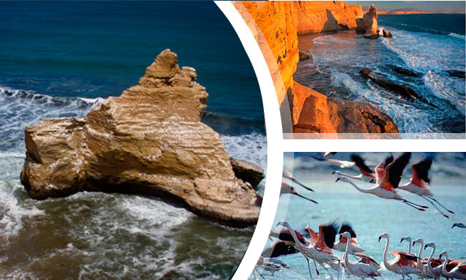 Ica para dos 2D/1N Full Tour Ica de aventura en Paracas y full playas