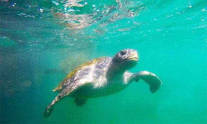 Órganos 3D/2N Hotel Gran Velero nado con tortugas tour en Manglares y mas