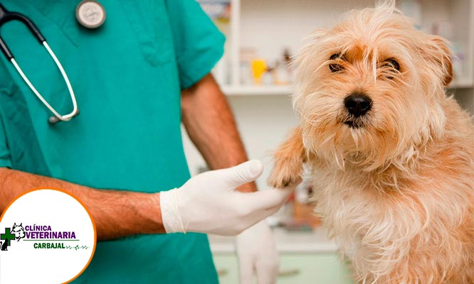 Baño medicado para perros consulta medica desparasitacion y mas