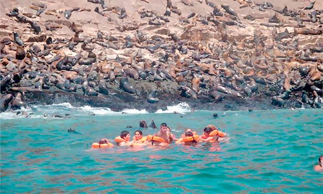 Callao-La Punta Full day de playa en Yate nada con lobos marinos en Islas Palomino