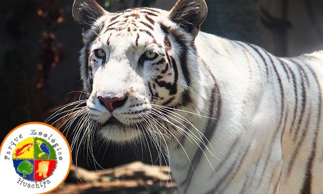 Zoologico de Huachipa ¡Compra online Lunes a Sabado Muestra el cupon desde tu celular!